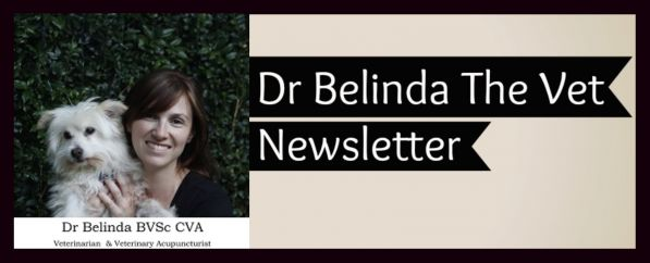 This the link to my achieved newsletters. If you haven't already sign up for you weekly dose of four-legged veterinary news!
