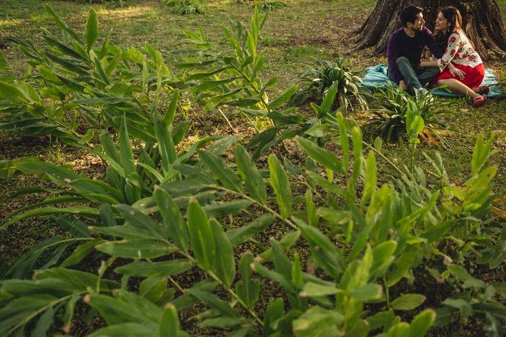 Preboda novios en Parque, Parque Nuestra señora de Gabriela, fotógrafo matrimonio Santiago, Fotógrafo matrimonio Viña, fotógrafo matrimonio Concepción, novios en la naturaleza