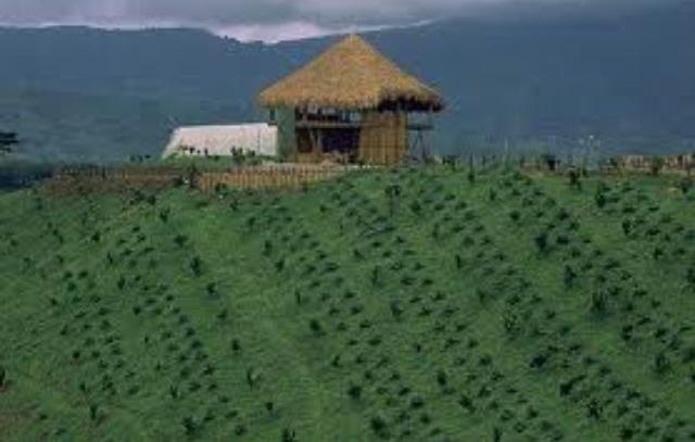 Colombia - Eje Cafetero, Quindío.