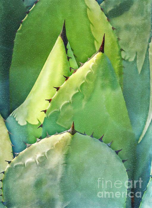 Green cactus detail
