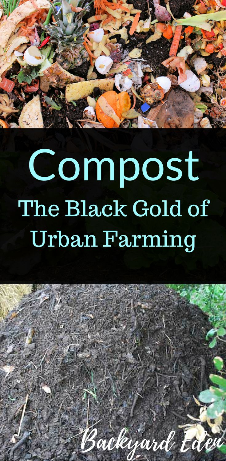 What is compost? Compost, The black gold of Urban Farming is used to feed our plants and gardens.  Take a look to learn more!