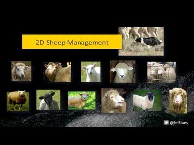 jef staes - 2D sheepmanagement