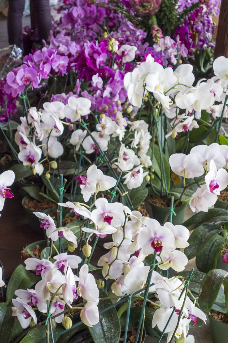 Wedding decoration inspired by bright purple - pink - white orchids. Simply beautiful… Delicate and very elegant