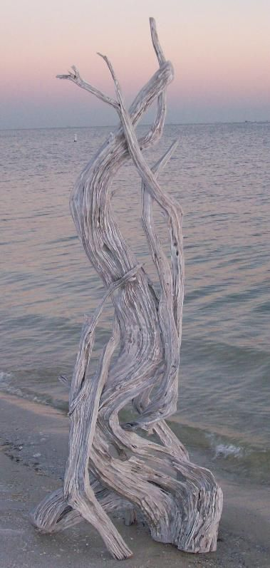 Driftwood like this would make a great sculptural element for the garden