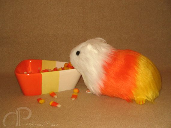 Etsy の Big Candy Corn Guinea Pig Plushie by Morumoto