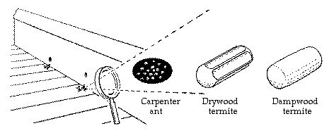 The fecal pellets produced by drywood termites are elongate with rounded ends and have six flattened or roundly depressed surfaces separated...