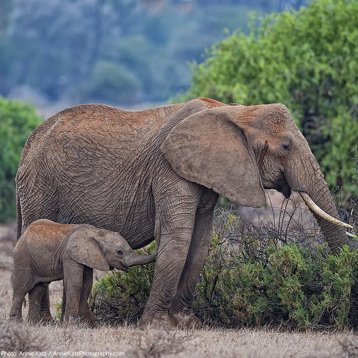 Elephant brains weigh 11 pounds (5 kilograms). That's more than the brain of any other land animal!