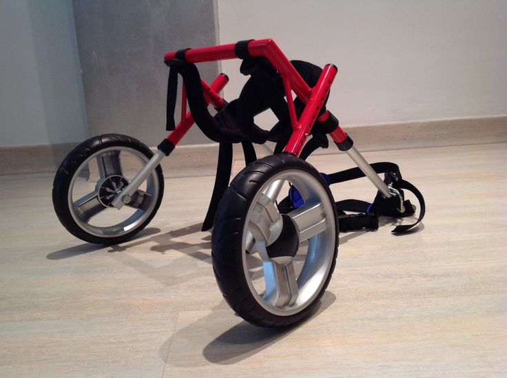 46 best images about silla de ruedas para perros on for Sillas para perros