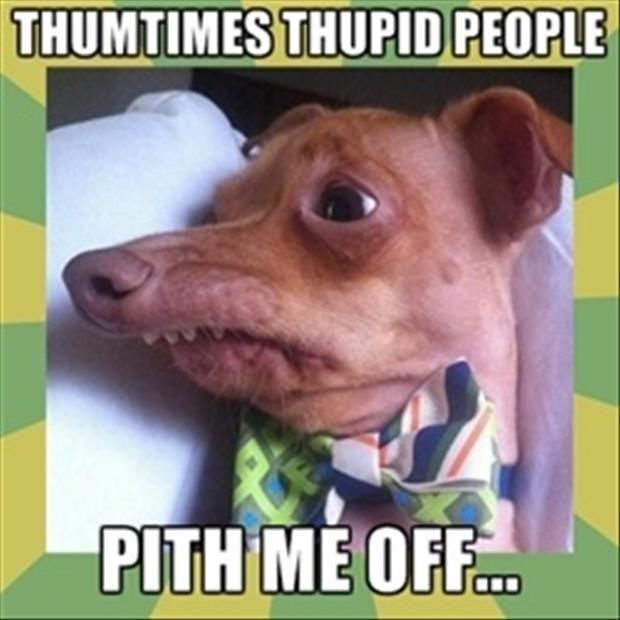 89 best images about Lisp Meme Dog on Pinterest | 4th ... - photo#7