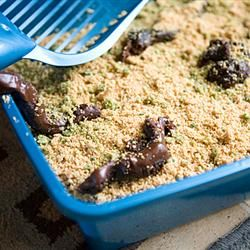 "Kitty Litter Cake | ""I make this cake almost every Halloween! Took it to work one year and it was the hit of the office party. Looks so real and is actually really good!!"""
