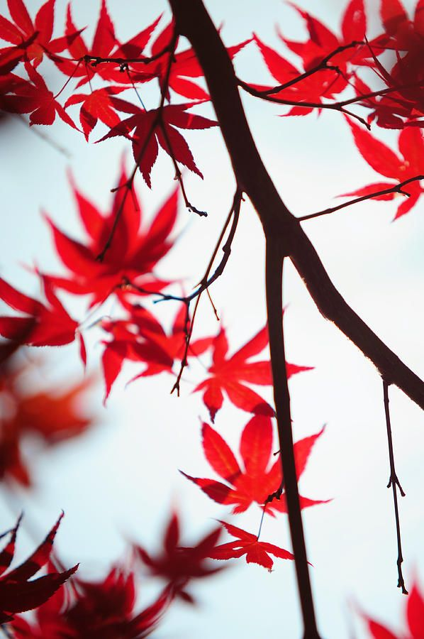 Autumn Painting In Japanese Style by Jenny Rainbow