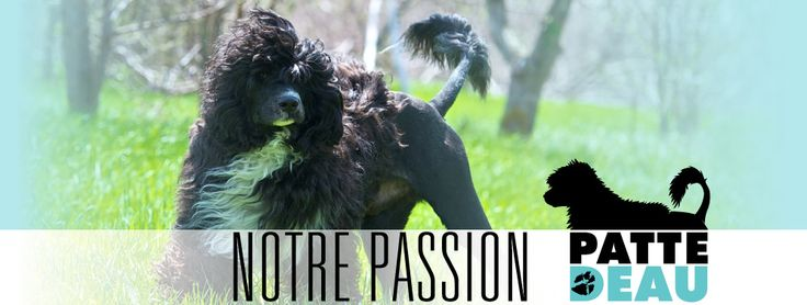 entete passion