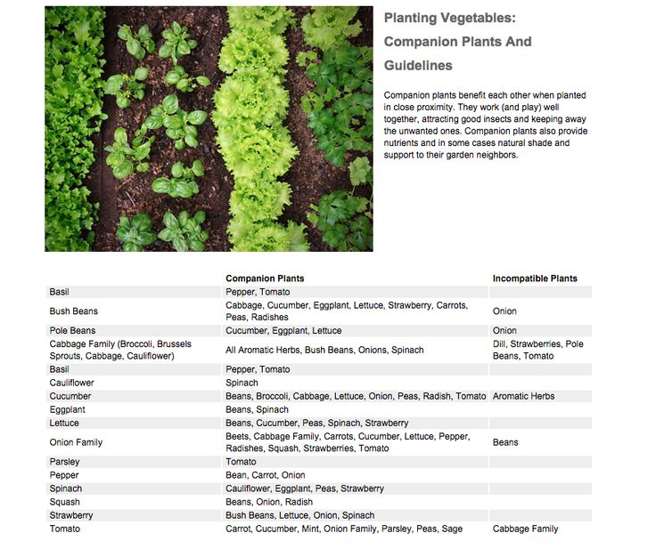 Companion Planting Companion Planting Plant Benefits 400 x 300