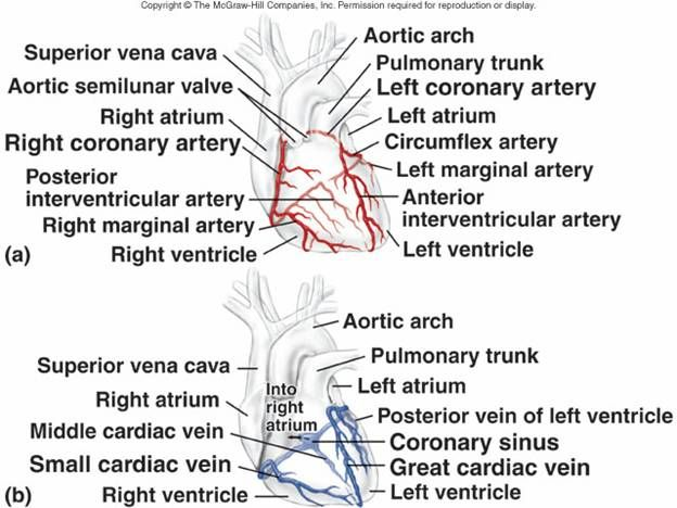 31 best images about Phlebotomy on Pinterest | Respiratory ...