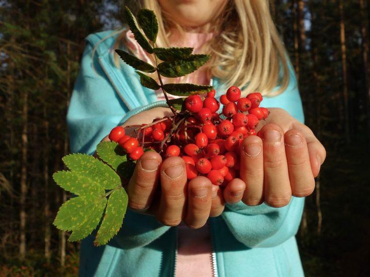 Örtexperten Alexandra De Paoli tipsar om nyttan med rönnbär | Epoch Times Sverige