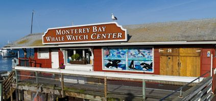 """Monterey Bay Whale Watch Center - """"the"""" company to use - apparently other companies follow their boats because they always see whales!  and they guarantee a sighting + longer trips than the others"""