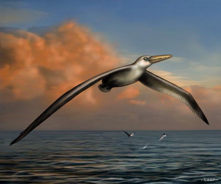 Na nedatovanej snímke je zobrazenie podľa rekonštrukcie kostry najväčšieho lietajúceho vtáka všetkých čias. Gigantický vták Pelagornis sandersi mal rozpätie krídel vyše 6,4 metra, čo je vo veľkosti dnešnej žirafy a jeho kostru našli v roku 1983 neďaleko Carlestonu. Zobrazenie poskytlo Bruce Museum z amerického Greenwichu v pondelok 7. júla 2014.