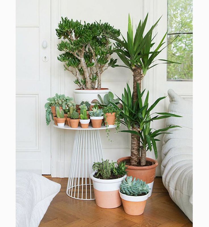 Best 25 indoor plant stands ideas only on pinterest for Jardin interieur appartement