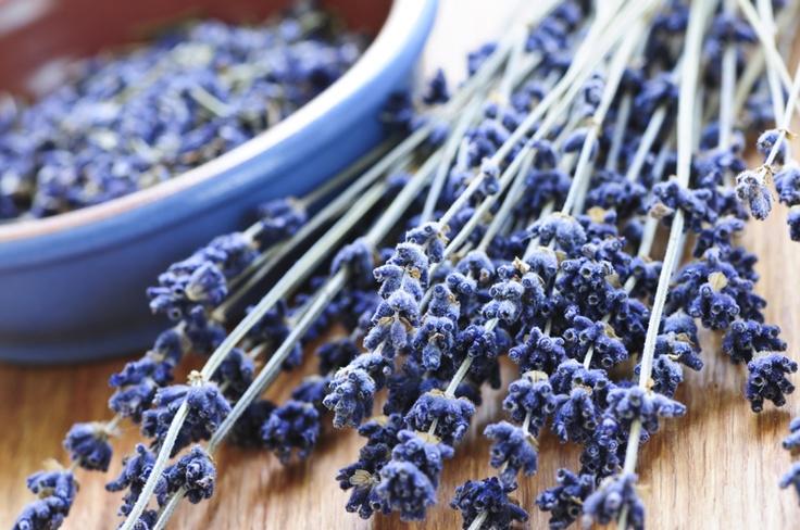 AT loves lavender