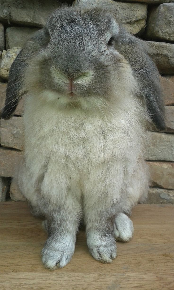Photo of Kiki for fans of Bunny Rabbits.