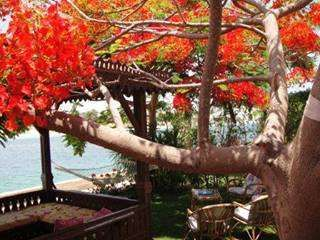 RENT Villa Marina www.marina-villa.com, Marina, Alexandria, Egypt - Property ID:7445 - MyPropertyHunter