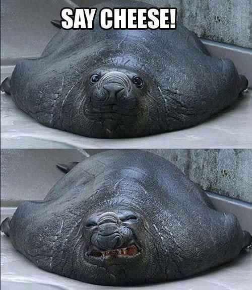 Cheese !