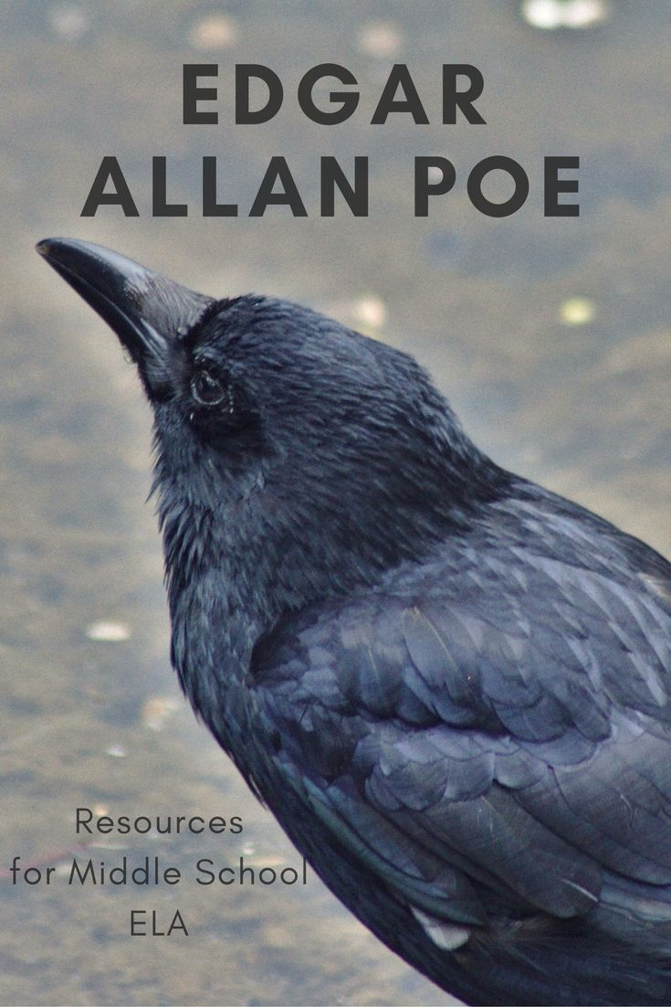 Rigorous, yet accessible resources for teaching Edgar Allan Poe in your middle school ELA classroom. Incorporates close reading and writing with a a variety of ELA skills. All resources include handouts and answer keys.