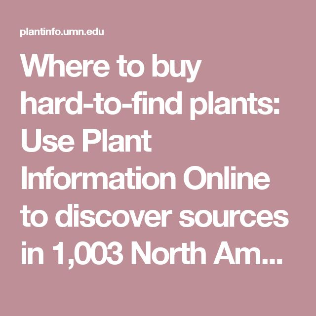 Where to buy hard-to-find plants: Use Plant Information Online to discover sources in 1,003 North American nurseries including information on 2,741 North American seed and nursery firms. Plant Information Online is a free service of the University of Minnesota Libraries.