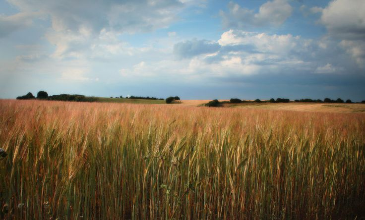 Summer Field by Iron-Eye.deviantart.com on @DeviantArt