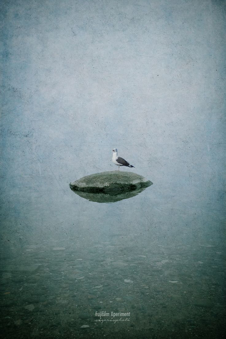 Seagull and the stone.