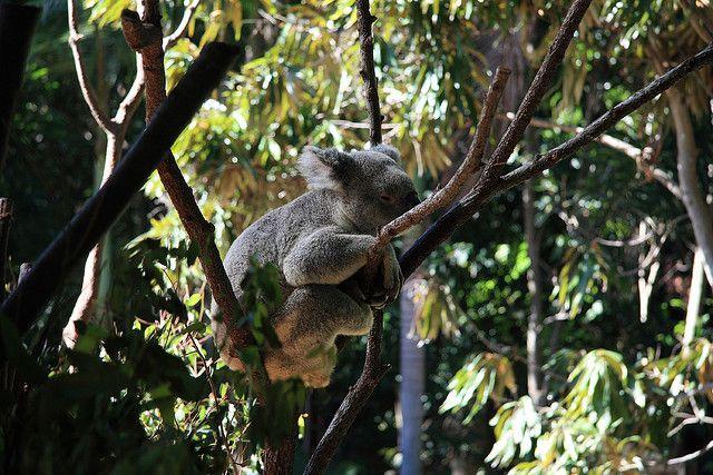 Currumbin Wildlife Sanctuary 022   Flickr - Photo Sharing!