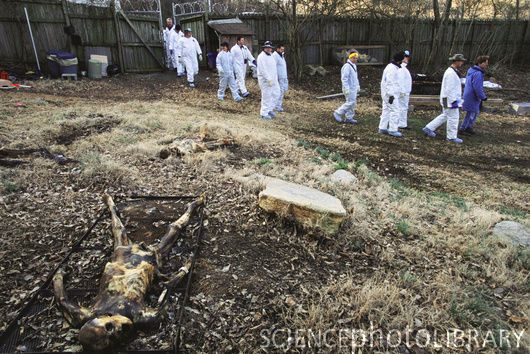 forensic anthropology research paper