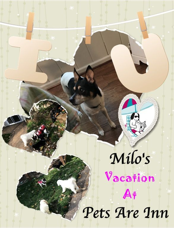 Hugs And Morning Kisses From Milo Have A Blessed Day Petsareinn