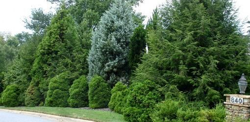 20 best images about landscape ideas on pinterest trees for Garden windbreak designs