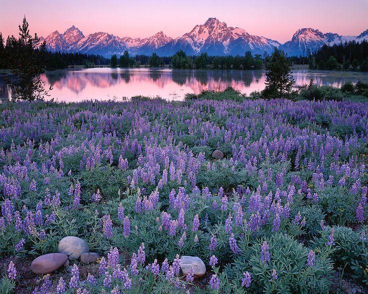 Pilgrim Creek - Grand Teton National Park (Backpacker ...