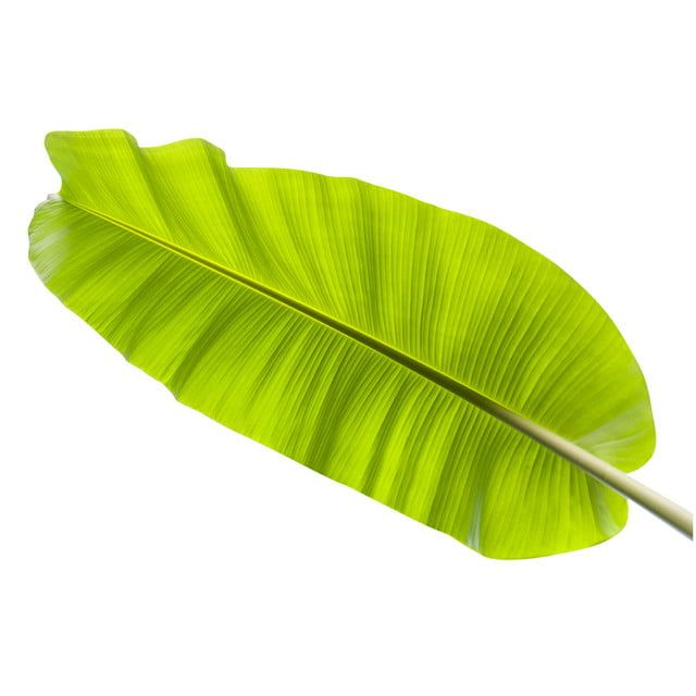 Banana Leaf Leaf Clipart Leaf Background Png Transparent Clipart Image And Psd File For Free Download Banana Leaf Banana Leaves Watercolor Leaf Clipart