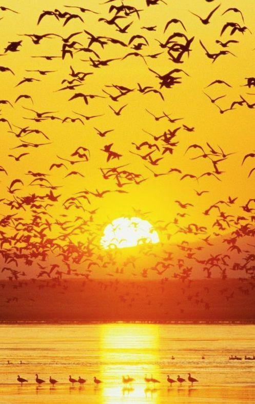 Espectacular atardecer con el vuelo de las aves.