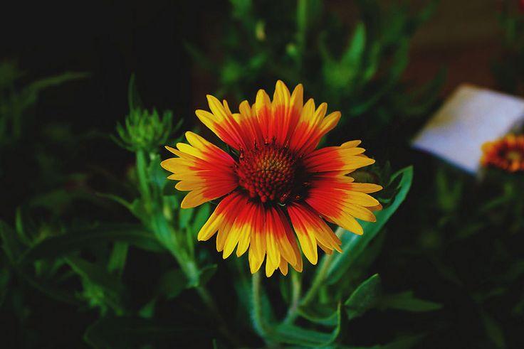 Flower nature photo