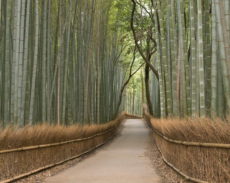 Eazywallz  - Bamboo grove Wall Mural, $114.13 (http://www.eazywallz.com/bamboo-grove-wall-mural/)GO TO THIS SITE FOR INCREDIBLE NATURE OR ART INSPIRED WALL MURALS.  SO CREATIVE.  PRICES ARE OK, ARTISTIC EXPRESSION FANTASTIC.