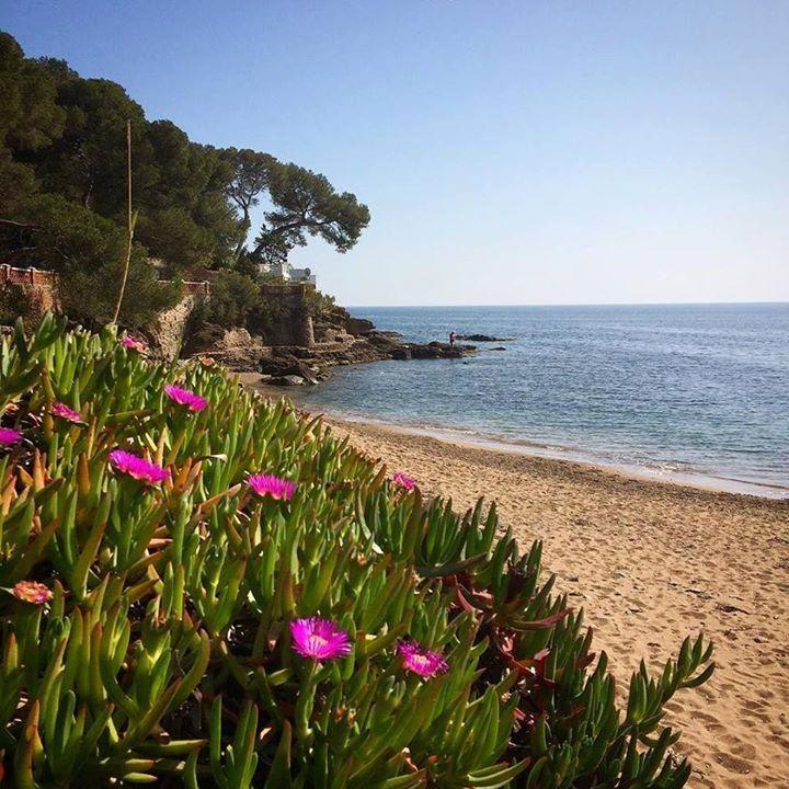 Sur le parcours du Swimrun Estérel Saint Raphaël le samedi 18 mars #swimrun #esterel #saintraphael #var #france #beach #flowers #flower #sea #blue #holiday #sand #nature #visitvar #mysaintraphael #visitesterel #cotedazur #cotedazurfrance #cotedazurnow http://ift.tt/2n6cVEl