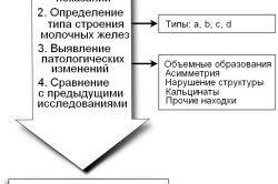 Порядок действий врача при проведении процедуры УЗИ