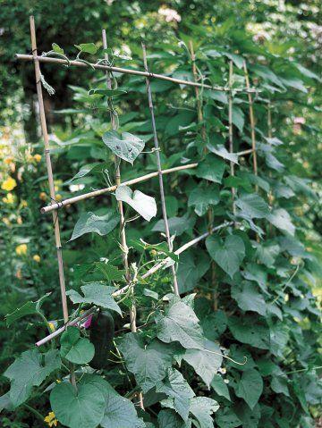 Les 25 meilleures id es de la cat gorie tuteur plante sur pinterest - Tuteur plante grimpante ...