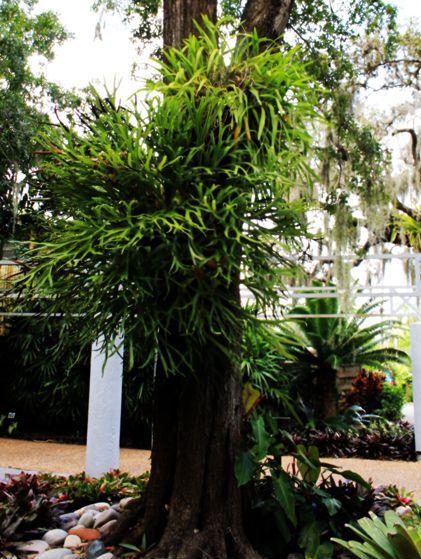 27 best South Florida gardens images on Pinterest Florida