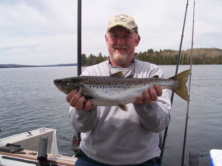 86 best 2013 pictures of fish caught on maine pro series for Maine salmon fishing