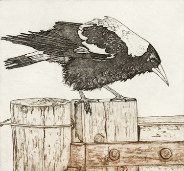 Ruffled - Kevin Foley Etching and Aquatint 2011 $440.00 Available at www.cascadeprintroom.com.au