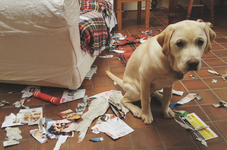 Best Images About Dogs On Pinterest - 26 funny photos of guilty dogs