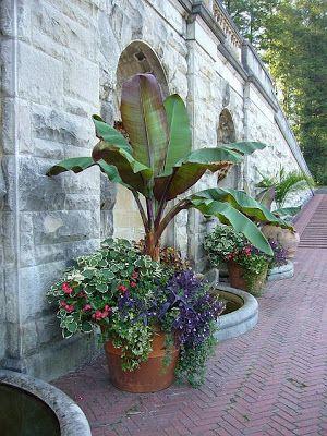 tree house palm