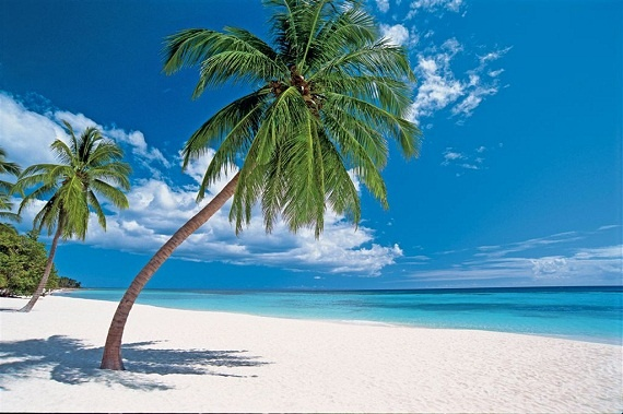 Take shade under a palm tree in Punta Cana.