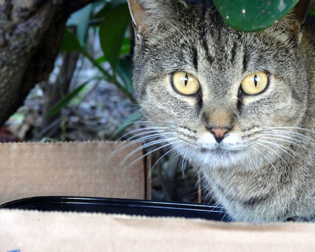 Tabitha, a feral Riverfront Miami Cat http://ihavecat.com/2014/02/03/wine-for-cat-lovers-that-helps-cats/
