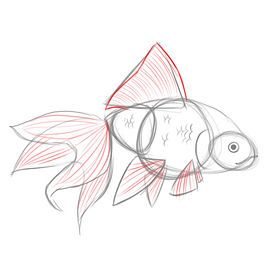How to Draw Goldfish...fun summer lessons with the kids